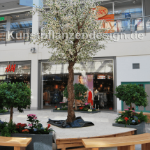 031_kirschbluetenbaum_cream-weiß_h_500cm_dm_300cm_