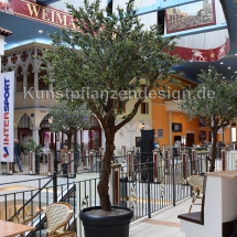 001-6 olivenbaum h.350cm,dm.200cm